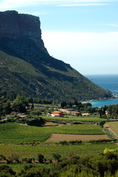 Vineyards on the edge of the Sea credit: Wines of Provence