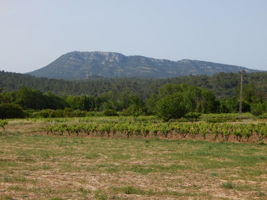Vineyards outside Correns